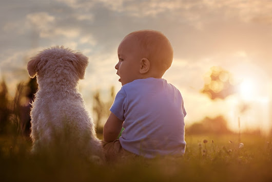 Babies with a dog in the home may have a lower risk of asthma and eczema