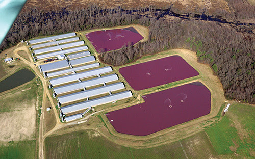 Combating CAFOs | Concentrated Animal Feeding Operations and Water Quality