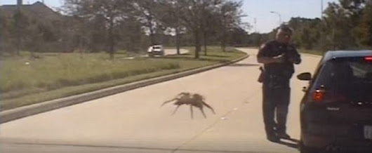 Giant Spider Stalks Cop During Texas Traffic Stop, Sort Of