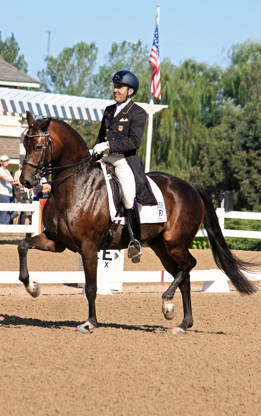 Piaffe Performance Has Designs on the 2016 Markel/USEF Young Horse and Developing Horse Dressage National Championships