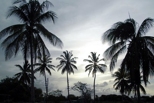 Coconut Trees into the Night