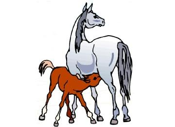 Pferde Malvorlagen Ausdrucken