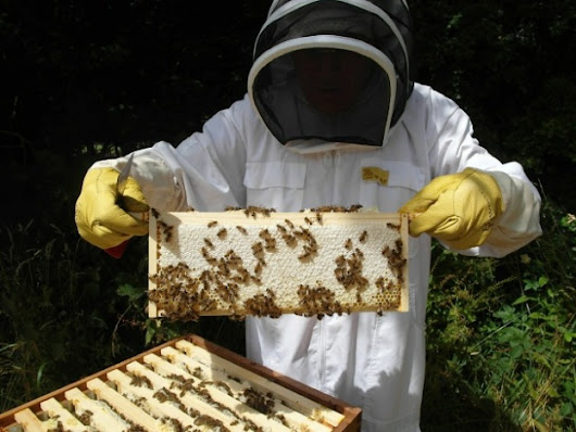 A challenging year - Bee keeping at Compton Verney.