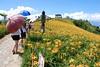 Golden Needles Field (DSC_0547)