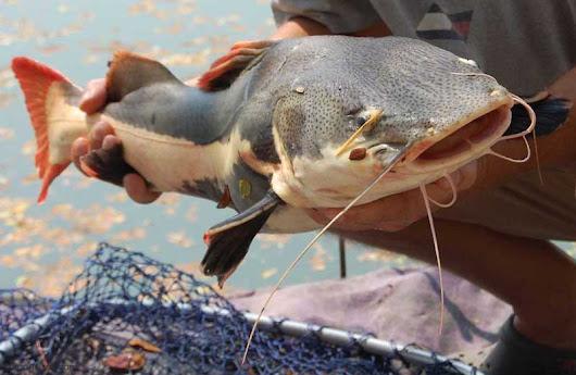рыбалка в поселке озерный