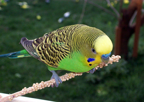 Birds_9510