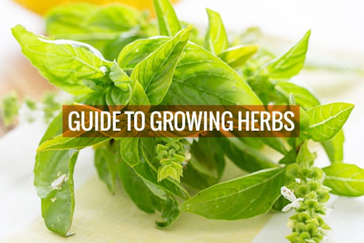 Guide to Growing Your Own Herbs + How to Dry Them