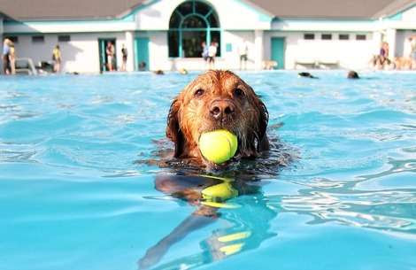 How Swimming Can Help Your Dog's Health