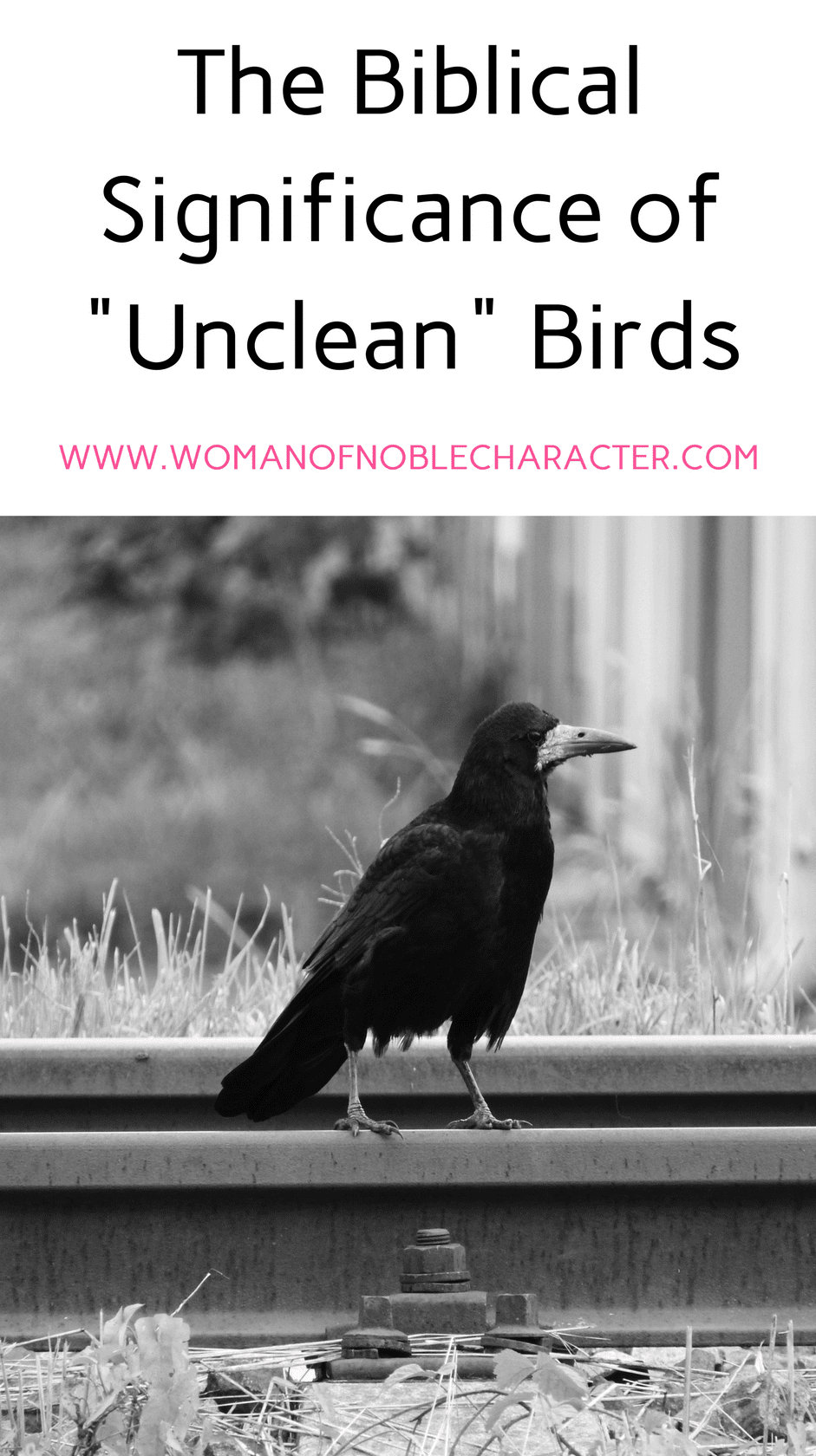 Eagles Ravens And Unclean Birds In The Bible With Scripture