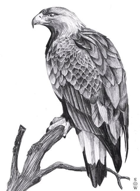 golden eagle  glaiceana  deviantart art pinterest