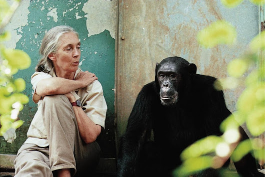 Lessons I Learned From Jane Goodall | Grant Whisperer