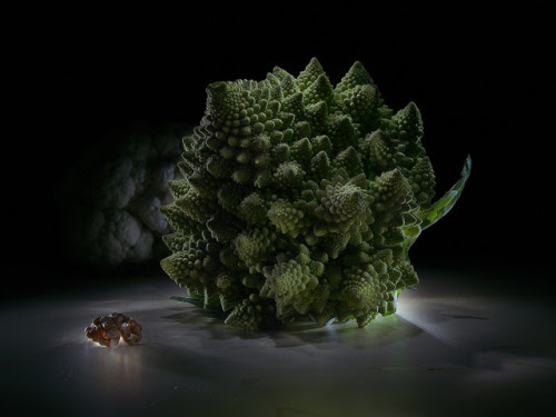 My photography • Fractal supper on Flickr. I do this lightpainting...