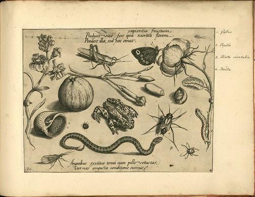 Archetypa studiaque patris - Joris Hoefnagel (1592) d