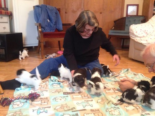 Me & DH with ten 5 week old puppies, yesterday! Eikes!