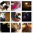 Vinecats, An Unmoderated Stream of Cat Videos on Vine & Twitter