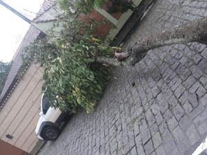 Árvore cai em carro em lorena (Foto: Mara Rodrigues/Vanguarda Repórter)