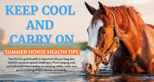 Keep Cool and Carry On: Summer Horse Health Tips [Infographic]