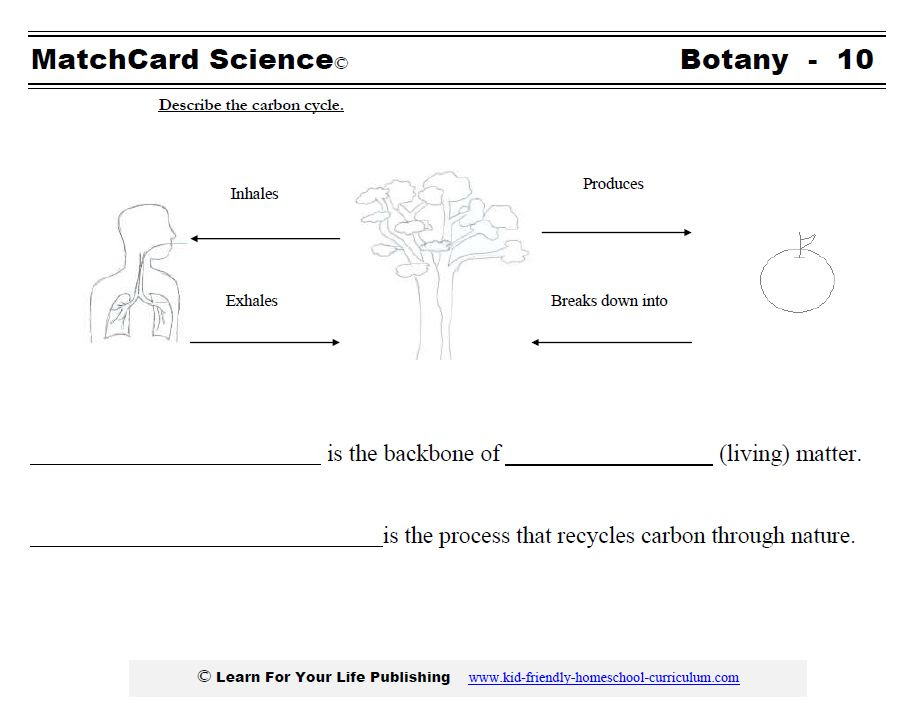 Carbon Cycle Diagram Worksheet