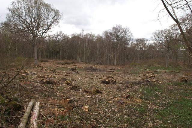 DSC_3787 cut coppice woodland