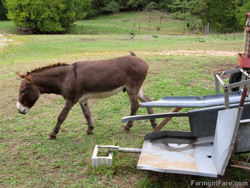 Donkey Doodle Dandy scratches an itch (4) - FarmgirlFare.com