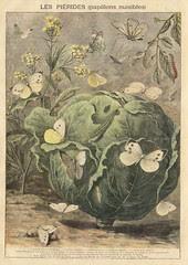 ptitjournal 13 juin 1897 in