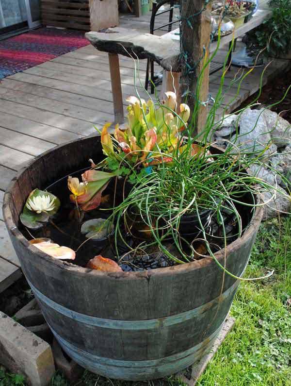 mini-pond-in-a-pot-woohome-2
