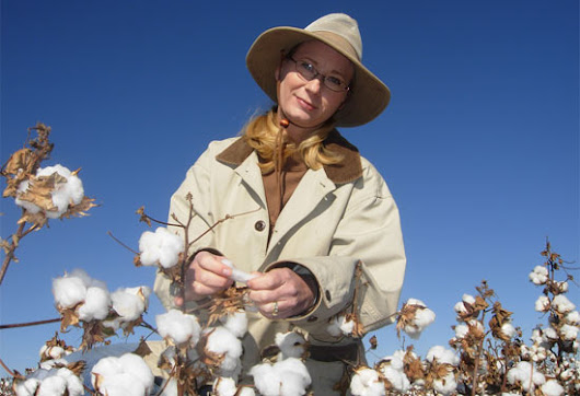 Scientist switches from developing GMOs to breeding organic cotton | The Organic & Non-GMO Report
