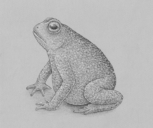 How to Draw a Frog Step by Step – New Tutorial on Envato Tuts+