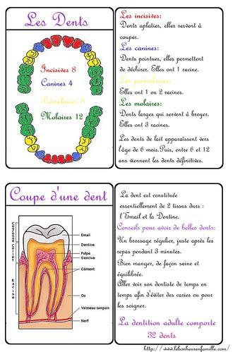 le bonheur en famille carte dents
