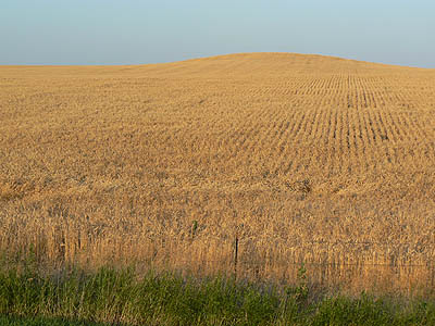 champs de blé.jpg