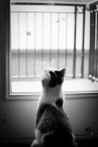 Watching snowflakes