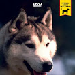 Siberian Husky, documentario video dvd, passione animali, carattere-training