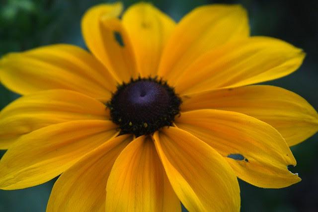 flowers, portland memory garden