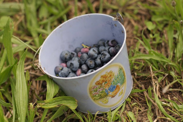 Blueberries for Sal play