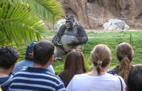 talking ape.jpg