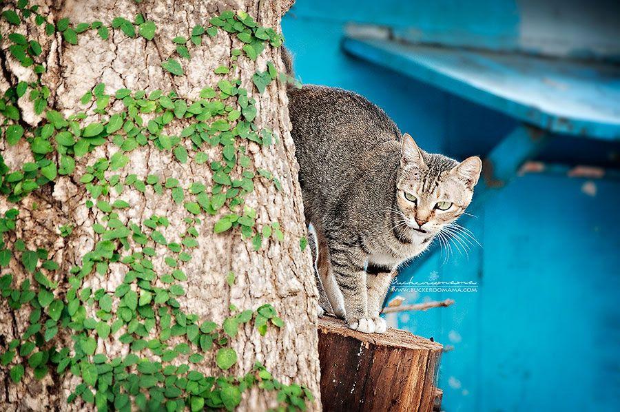 Fri - Nov 8, 2013 photo Cat-1_zps6d8808e2.jpg