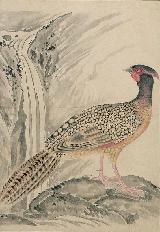 Ink + Watercolour  Bird sketch r