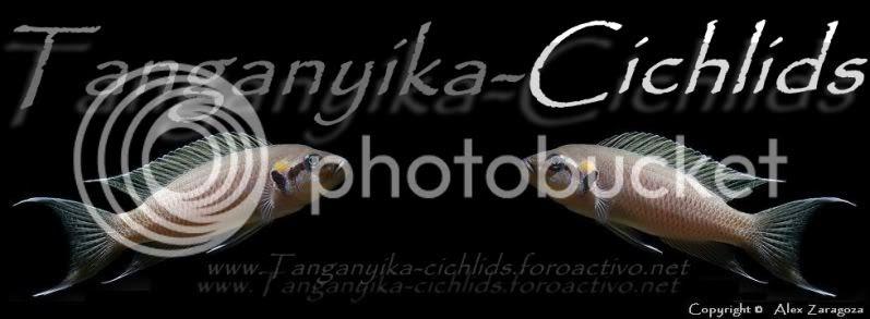 Foro Tanganyika