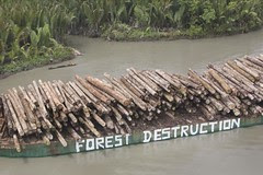 Forest Action in PNG
