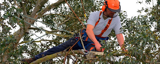 Tree Surgeon Potters Bar, Finchley Tree Cutting, Landscaping