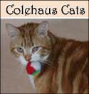 Colehaus Cat Seth