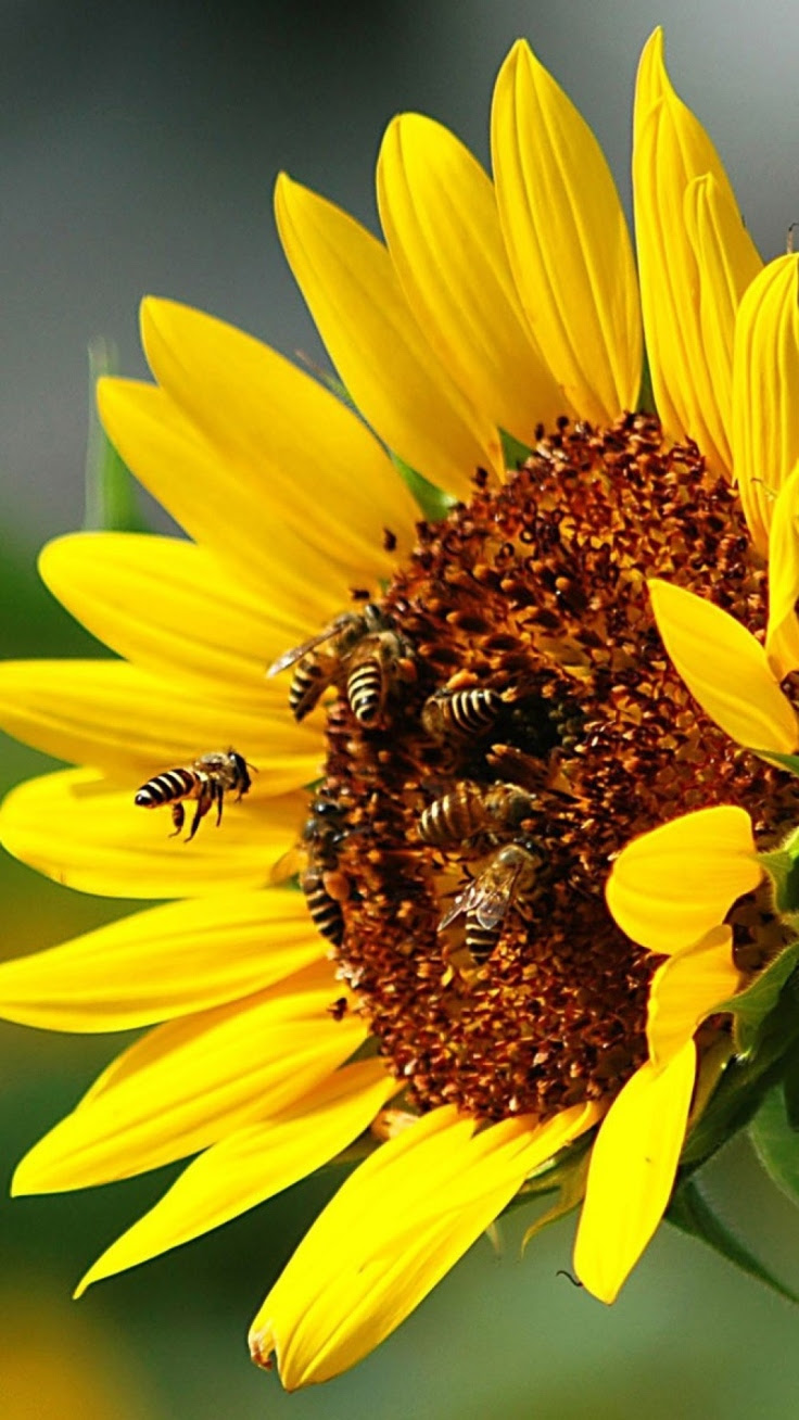Top 10 Plants for Your Garden to Help Save the Bees  Top Inspired