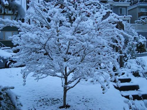 first snowfall November 20