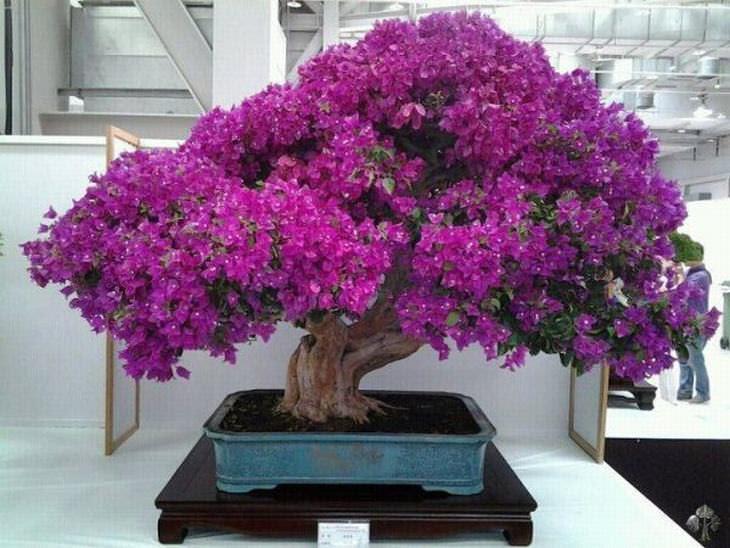 Os bonsais mais belos que você já viu