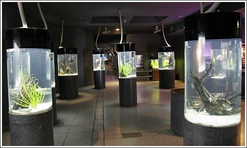 Phuket Aquarium Displays