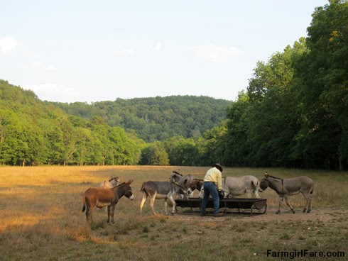 (18-13) Finally, treat time in Donkeyland - FarmgirlFare.com