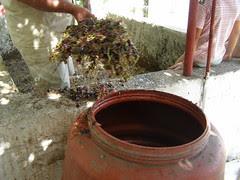 grape remnants ramni hania chania