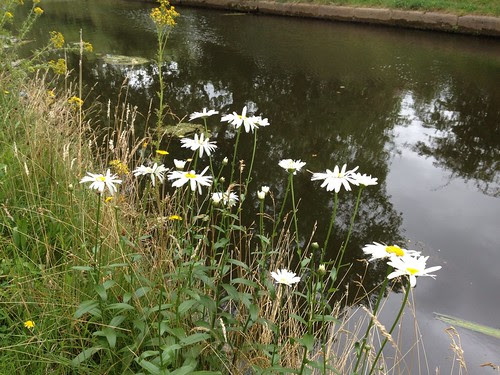 Canal side flowers