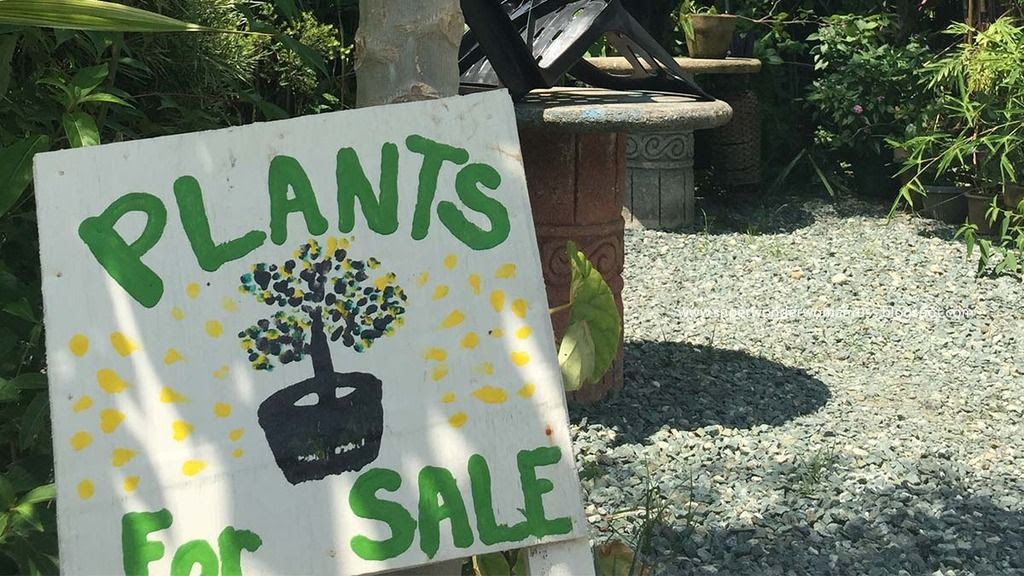 Plants for Sale at Marius, Silang