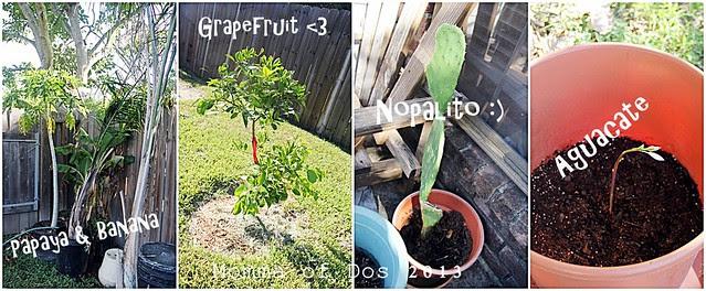 plantssaturday